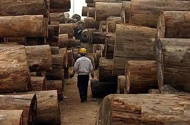 Buy African hard wood timber and lumber logs ready for sale