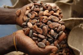 Buy WE HAVE COCOA BEANS, ARABICA AND ROBUSTA GREEN COFFEE BEANS FOR SALE