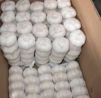 Buy Pure White Garlic and Fresh Ginger