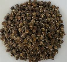 Buy Moringa Seed