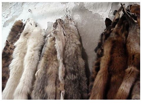 Buy Wet Salted Cow Hides