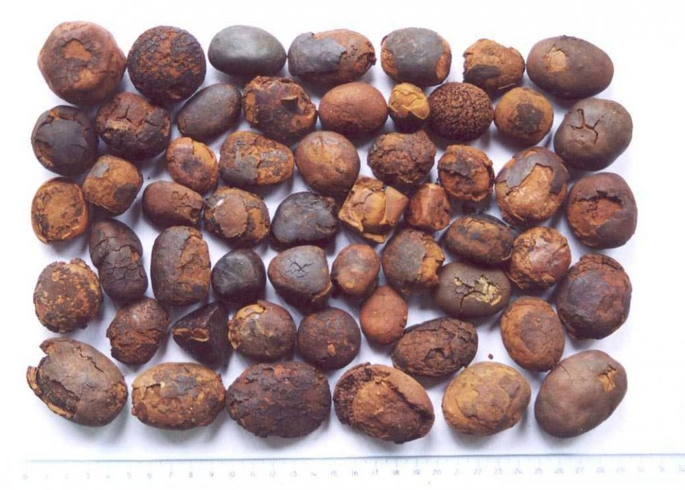 Buy We offer Cow/Ox/Cattle Gallstones available