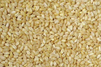 Bulgur seeds