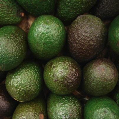 Buy Avocado