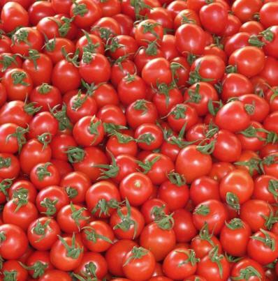 Buy Tomatoes