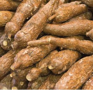Buy Cassava