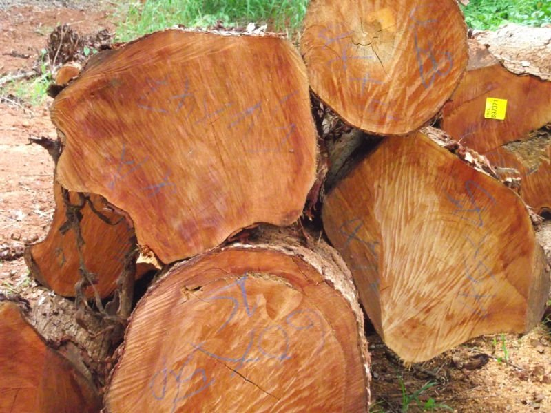 Buy Tropical Genuine Mahogany wood logs in stock for sale