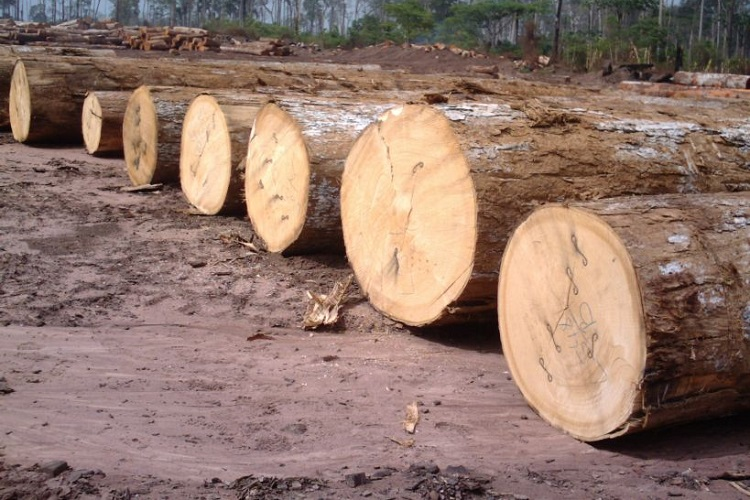 Tali Okan, Padouk, Ekop belli, Pachy and other timber woods. – Triniti LTD  | all.biz
