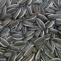 Buy Sunflower seeds