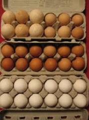 We offer Quail eggs and other types of eggs