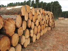 Round and cut Tropical timber(KOSSO, TEAK, ABSERIA