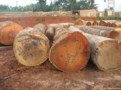 Iroko lumber