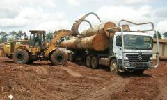 TIMBER LOGS AND SAWN WOOD FOR EXPORT