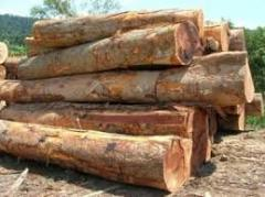 African hard wood timber and lumber logs ready