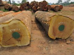 Quality Timber sawn logs african hardwoods in