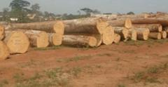 Timber Logs and Sawn Timber