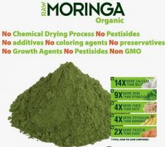 We Offer  Plant Extract bulk moringa leaf extract powder