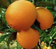 Φρούτα φρέσκα