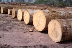 Tali  Okan, Padouk,  Ekop belli,  Pachy and other timber woods.