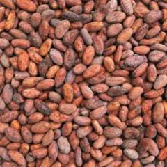 Hig grade dry Cocoa Beans